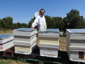 """""""Venir al Valle a ver a las abejas en acción es una actividad fascinante"""""""